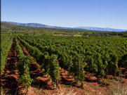 Enjoy Wine Tasting in historic vineyards